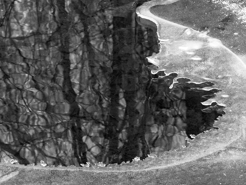 black/white photo of ice and water with trees